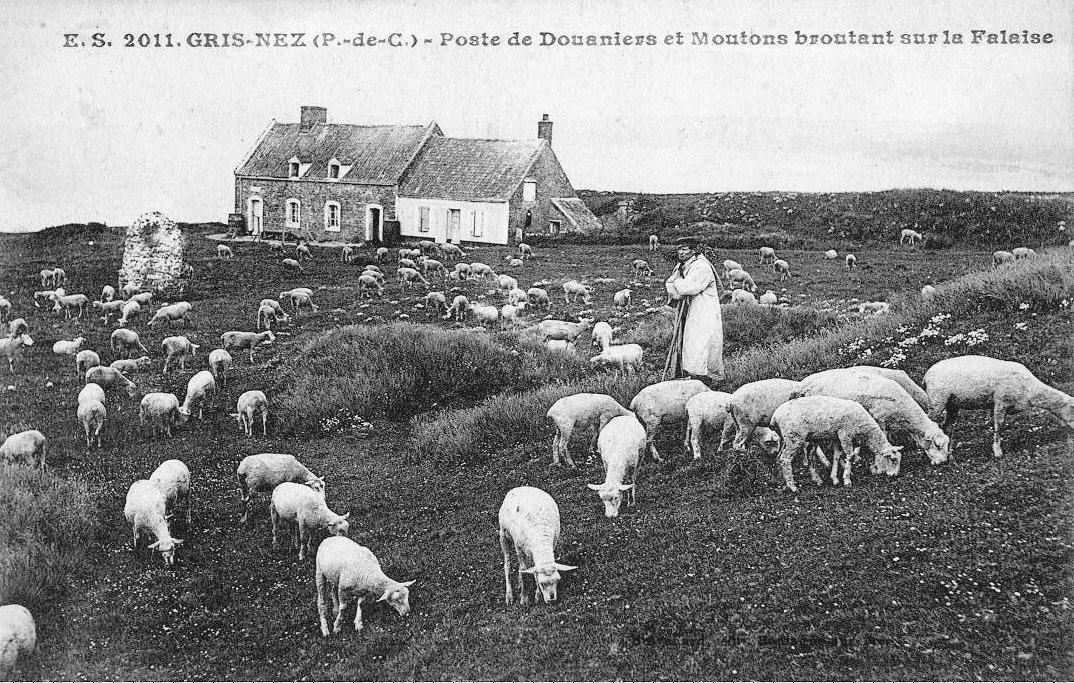 Poste de douaniers et moutons broutant sur la falaise au Cap Gris Nez