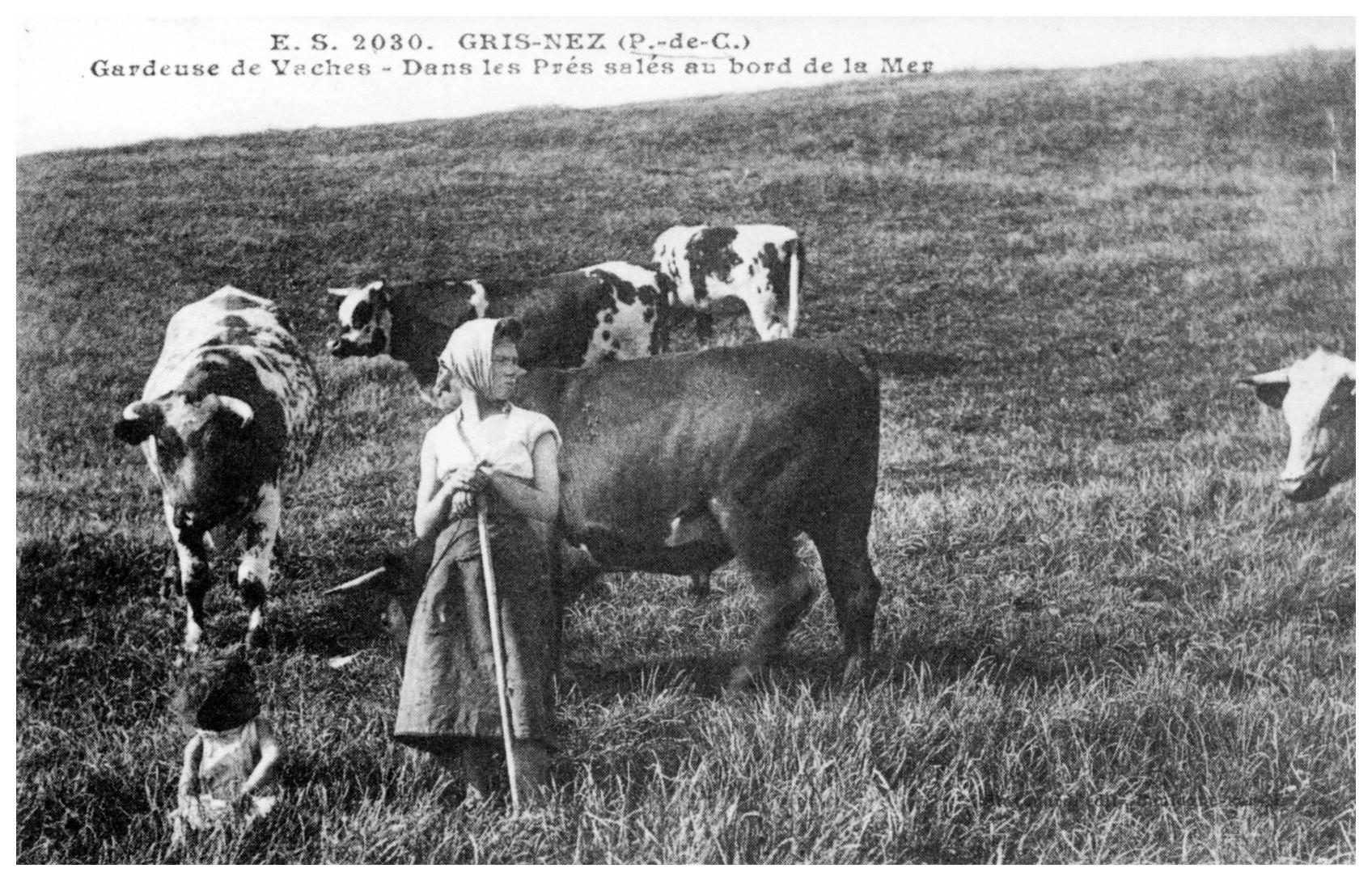 Gardeuse de vaches au Cap Gris Nez
