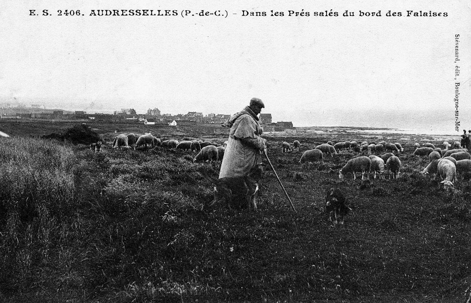 Audresselles - les moutons dans les prés salés