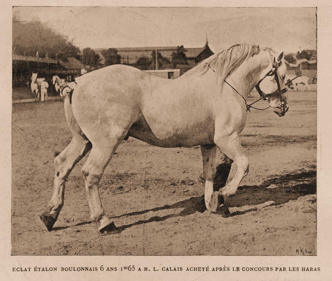ECLAT : étalon boulonnais au concours hippique de 1901