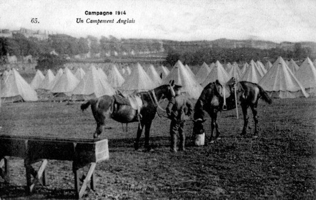 Guerre 14 Horses in an english camp near Boulogne
