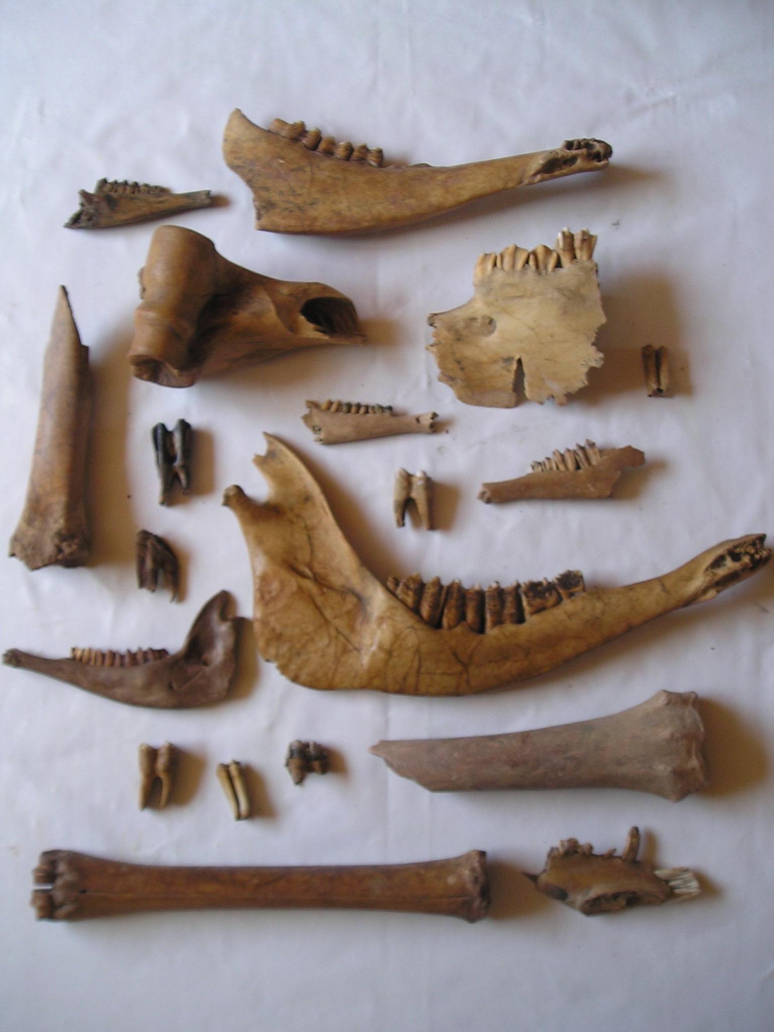 Ossements découverts à Strouanne près de Wissant