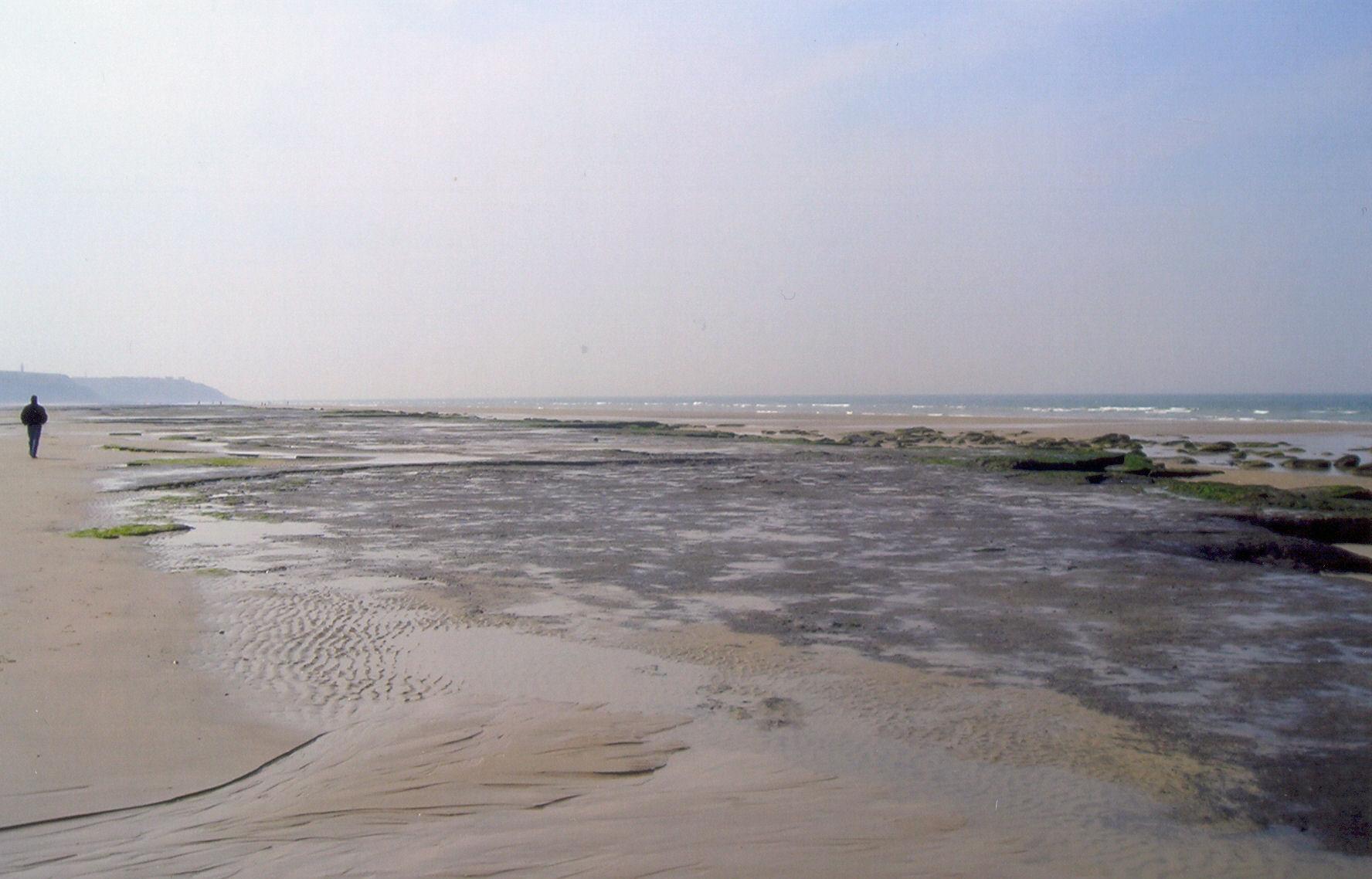 Vestiges d'une ancienne forêt sur la plage entre Wissant et Audinghen
